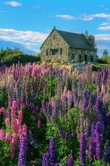 Church of the good shepherd and lupine field, lake tekapo