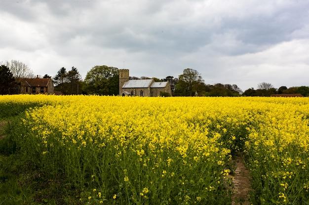 イギリスのノーフォークにある黄色い菜種の広大な畑にある教会