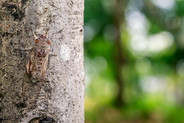나무에 매달린 매미와 흐린 배경