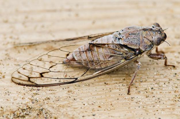 Cicada on wood