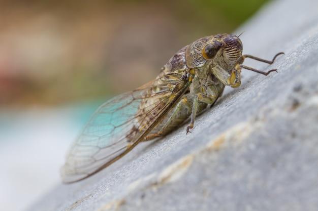 Cicadas in the ground