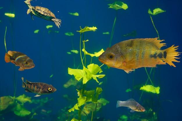Сенотская воронка cichlids fish ривьера майя