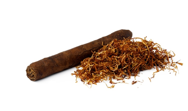 Cigar and bunch of dry tobacco leaves isolated on white background