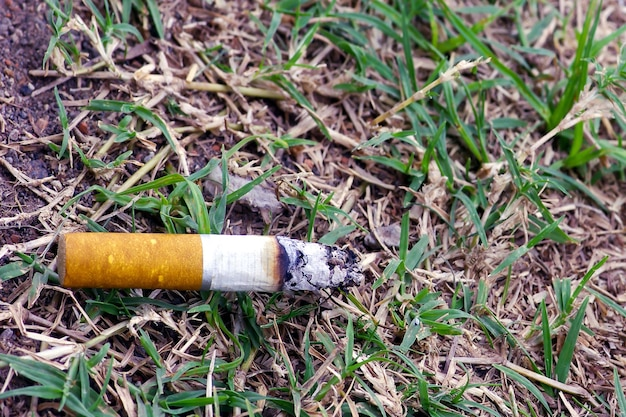 A cigarette butt on the dry grass