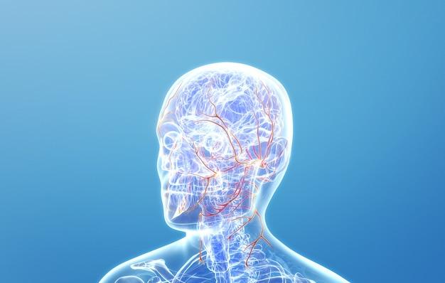 Cinema 4d rendering of human head nerves