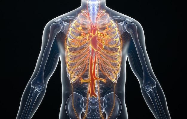 인간의 심혈관 신경 분포의 영화 4d 렌더링