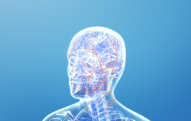 人間の頭の神経のcinema4dレンダリング