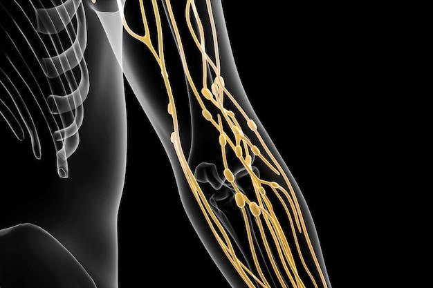 Визуализация распределения лимфатической системы в руке в cinema 4d