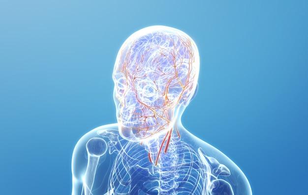 人間の顔の血管の分布のcinema4dレンダリング