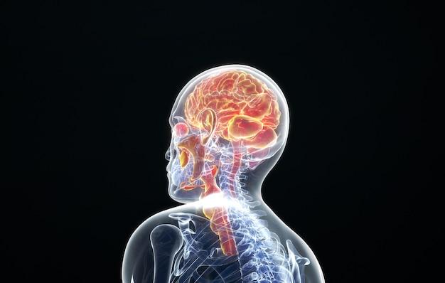 Cinema 4d rendering of side view of human brain tissue
