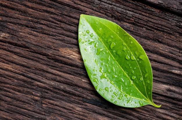 古い木の表面にシナモン樹皮の緑の葉。上面図、フラットレイ。