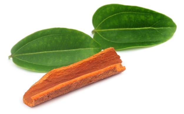白い背景の上に葉を持つシナモン樹皮