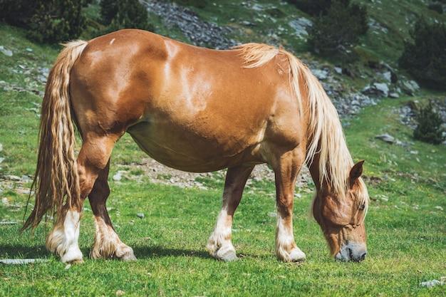 Лошадь с корицей, пасущаяся в горах