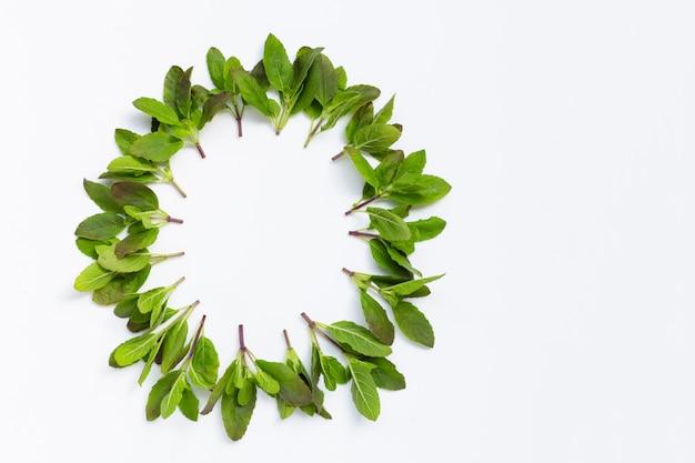Рамка круга сделана из листьев святого базилика на белой предпосылке.