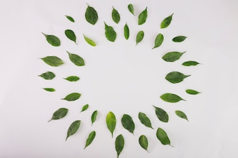 Circle from green leaves