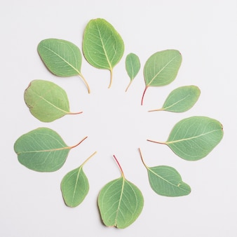 Circle from leaves