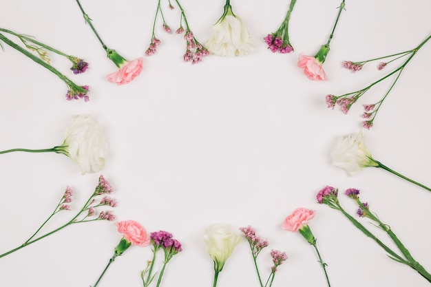 Circular carnations flower frame with space in the center for writing the text on white backdrop