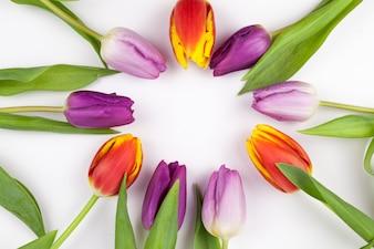 Круглая форма из разноцветных тюльпанов на белом фоне