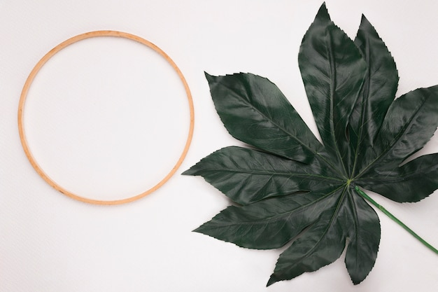 Circular wooden frame with one green leaf on white background