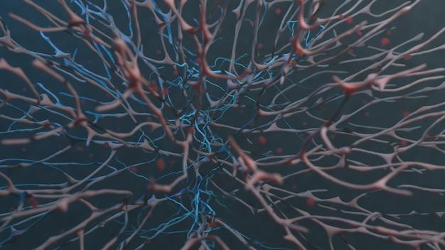 유기 조직의 순환계 매크로 이미지