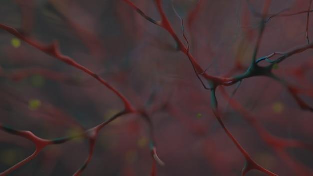 Circulatory system macro image of organic tissue