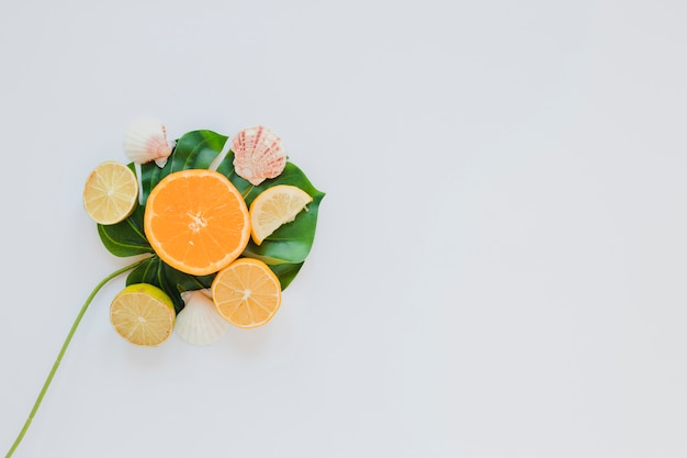 Citrus fruits with sea shells on palm leaf