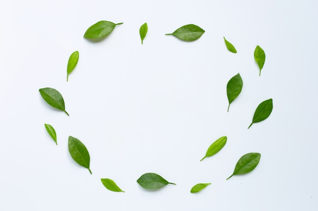 Citrus leaves circle on a white background.