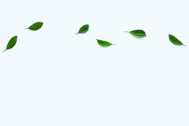 흰색 표면에 감귤 잎. 공간 복사