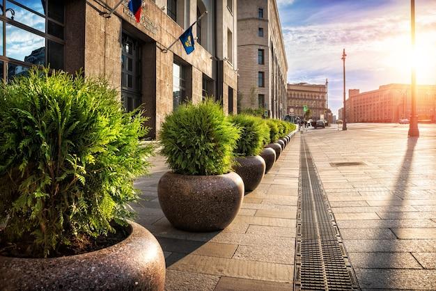 Городские клумбы с вечнозелеными пихтами на улицах москвы.