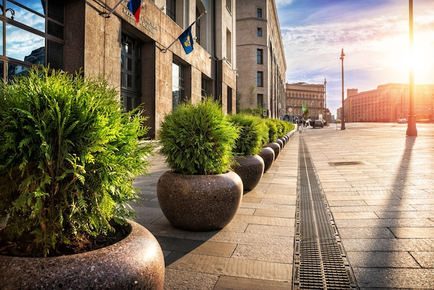 City flower beds with evergreen fir plants are on the streets of moscow.