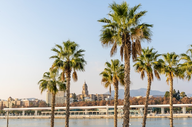 City hall of malaga in far distance behind palm trees