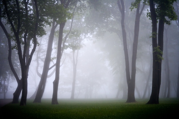 Городской парк в туманное утро - силуэт деревьев в туманном парке утром. контцепт чистой окружающей среды