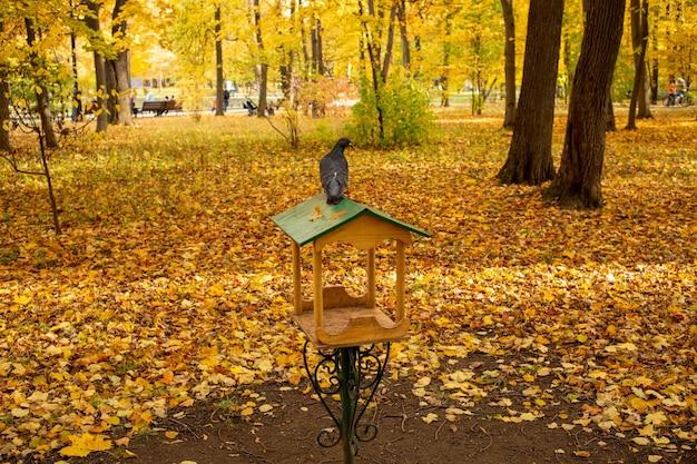 City pigeon sitting on bird feeder in autumn park