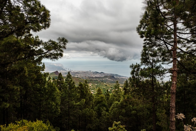 The city of santa cruz de tenerife seen from a clearing of a thick forest