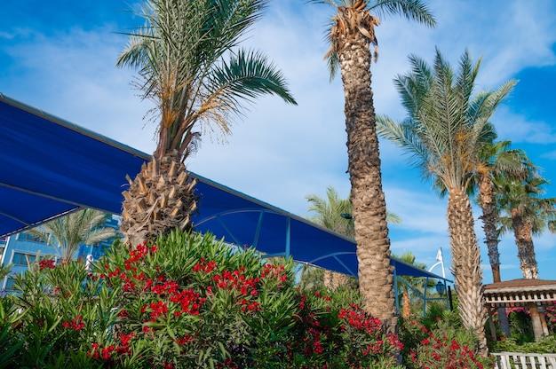 코코넛 야자수와 바다 포도 나무가 있는 오션 드라이브(ocean drive)를 따라 아름다운 마이애미 비치(miami beach)의 도시 경관을 감상하실 수 있습니다. 고품질 사진