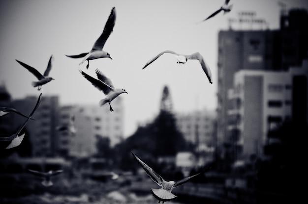 갈매기와 도시 풍경입니다. 필름 그레인 효과가있는 흑백 사진