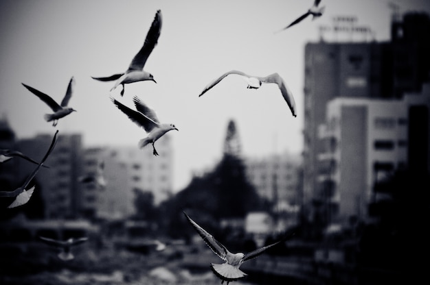 Cityscape with seagulls. black and white photo with film grain effect