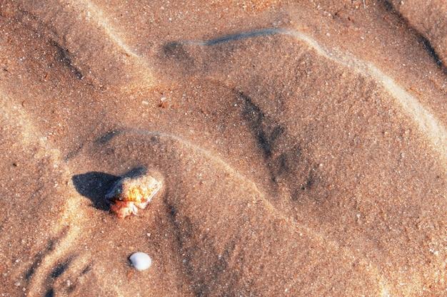 Моллюски и песок фона.