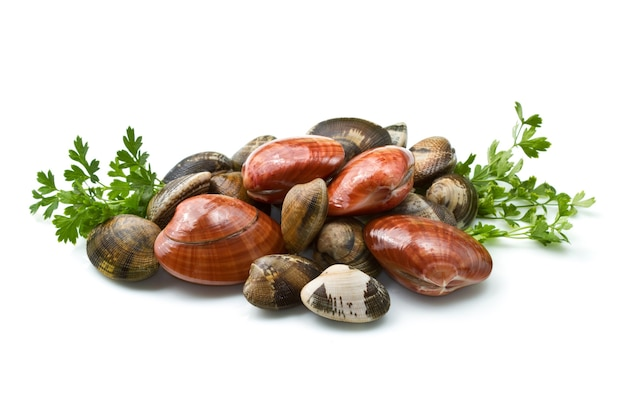 Clams isolated on a white wall