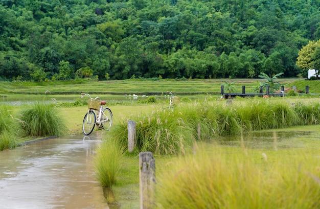 草の間の緑豊かな庭園、新鮮な梅雨の曲がった濡れた小道にある古典的な自転車公園