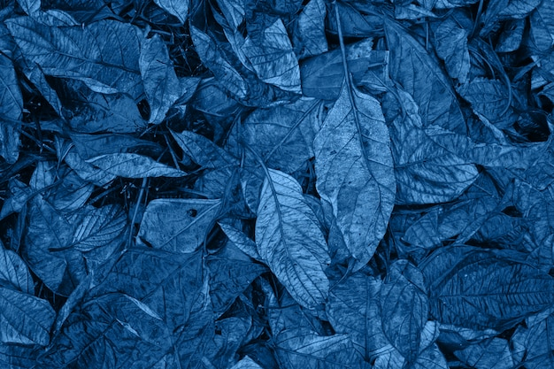 Classic blue monochrome moody dark art floral photo with little dried leaves