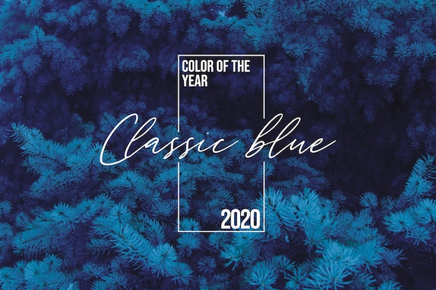 Classic blue spruce background with color of the 2020 year, blue pallette with classic blue swatch and winter fir tree, pine tree as a background, coloring in trend classic blue 2020 color.