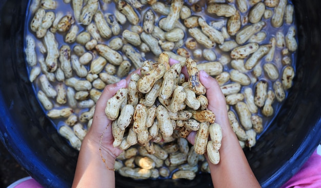 Clean fresh peanuts in water after harvest.
