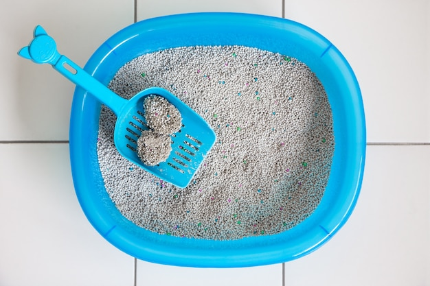 Clean sand box cat with scoop