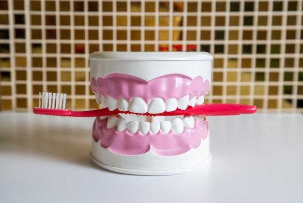 치과 의사 사무실의 테이블에 깨끗한 치아 치과 턱 모델과 빨간색 칫솔.