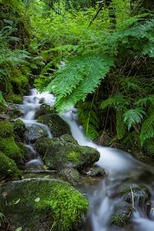 무성한 녹색 식물의 깨끗한 물 폭포 as fragas do eume galicia spain