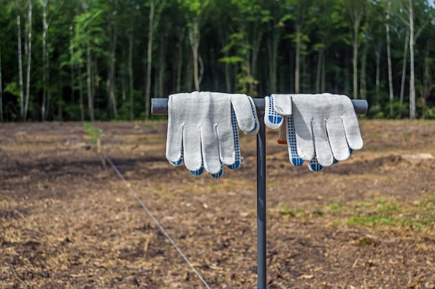 Clean, working gloves hanging on the tool for planting tree seedlings, before the forest planting