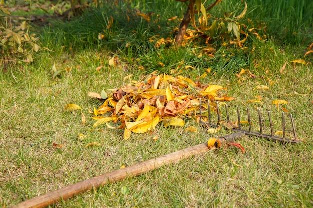 Осенняя уборка газона и сбор сухих листьев старыми граблями.