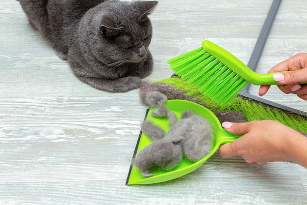 Cleaning cat hair, fur with mop, brush and dustpan