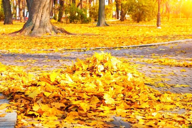 公園での清掃-地面に秋の黄色の葉の山